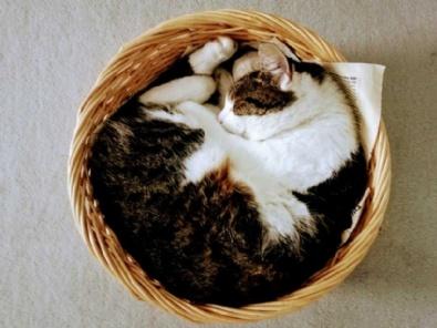 Spendenaktion für die Katzen im Tierheim Klagenfurt